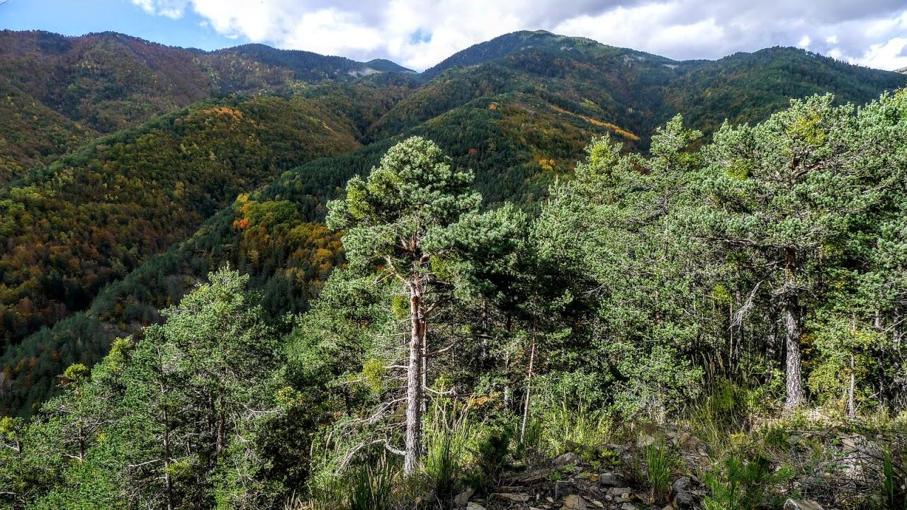 bosque - blog 1 (1)