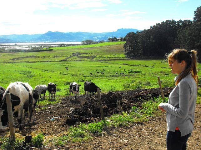 explotacion-vacuno-Cantabria-LUCIA-LOPEZ_EDIIMA20151125_0829_5